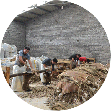 Yixing tannery's tanning process:sheepskin fleshing and scouring